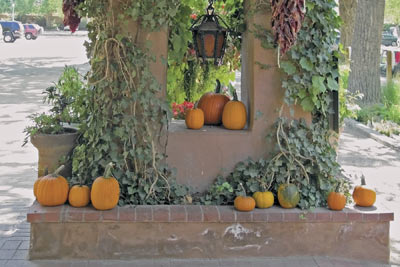 A photographic image of pumpkins outside the El Pinto Restaurant in Albuqerque, New Mexico.